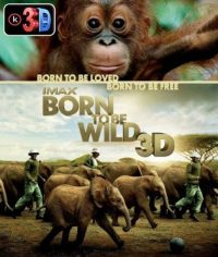 Portada-Born-to-be-Wild-3D