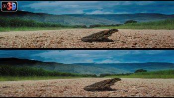 La conquista de los sapos de canha (3D)
